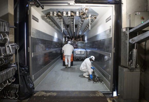 Viande bovine : la balance commerciale française se rééquilibre, mais la France reste importatrice nette
